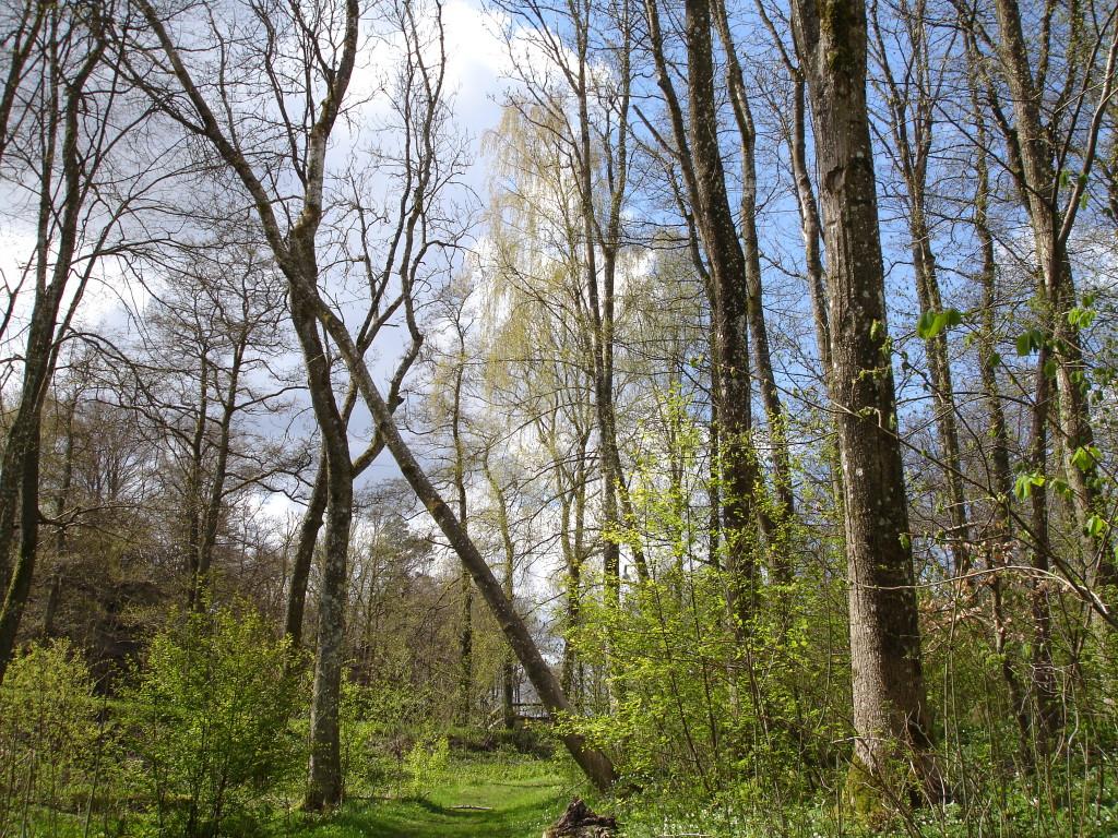 Gunnebo Foto: Josefin Gustafsson 2015-05-01
